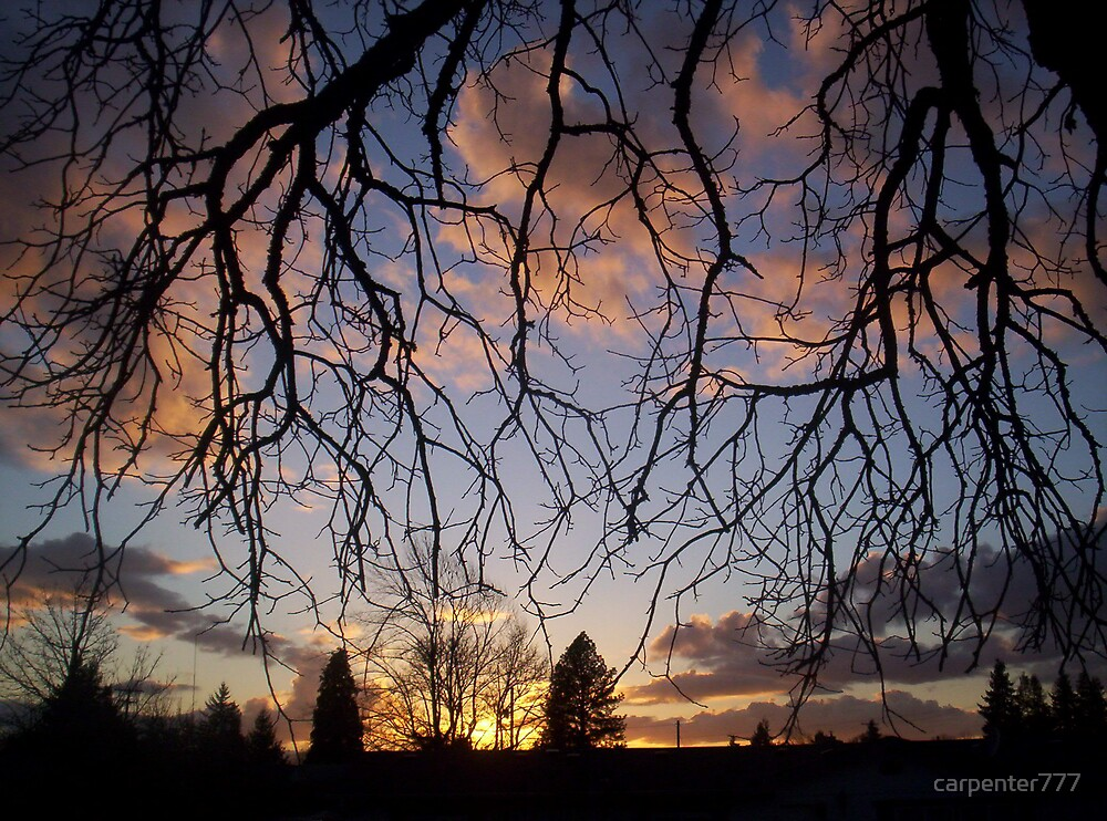 sunset and tree by carpenter777