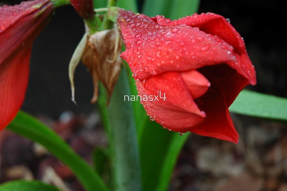 water drops  by nanasx4