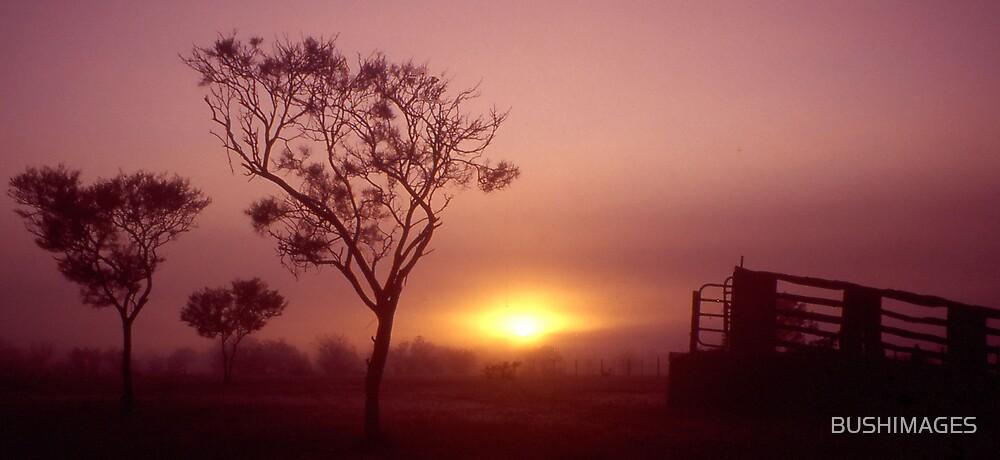MISTY MORN by BUSHIMAGES