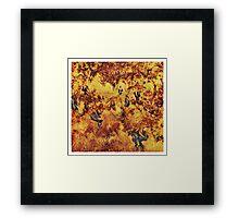 Abondoned vineyard Framed Print
