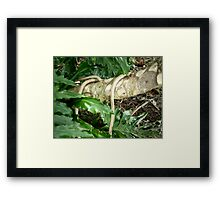 The Mystery Of Nature Framed Print