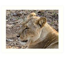 Portrait of a Lioness Art Print