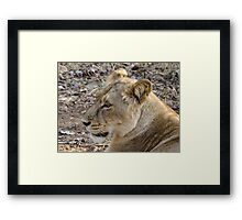 Portrait of a Lioness Framed Print