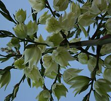 Flower by kirtusmiller
