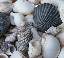 seashells by Geri Bragg