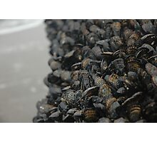 mussels Photographic Print