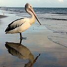 Pelican Bay by Julie Just