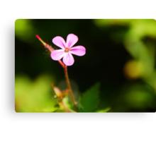 Tiny Pink Wild Flower Canvas Print
