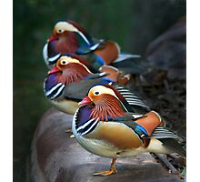 Mandarin Ducks Photographic Print