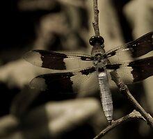 Dragon Fly by John Leeman
