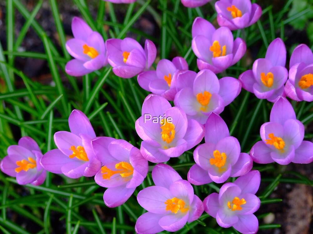 Purple Sun by Patje