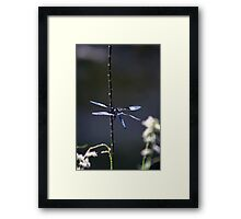 Blue Desert Dragon Framed Print