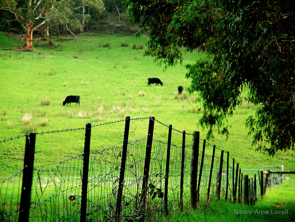 The Farm by Naomi-Anne Lovell