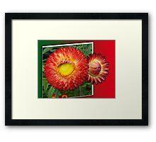 Flowers in the frame Framed Print