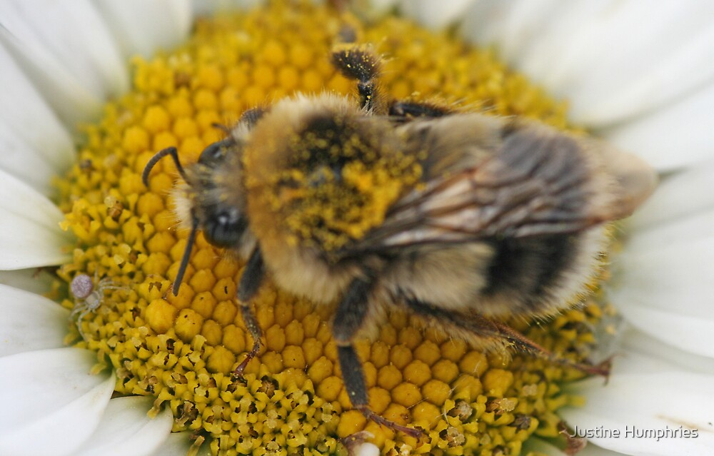 Busy Bee by Justine Humphries