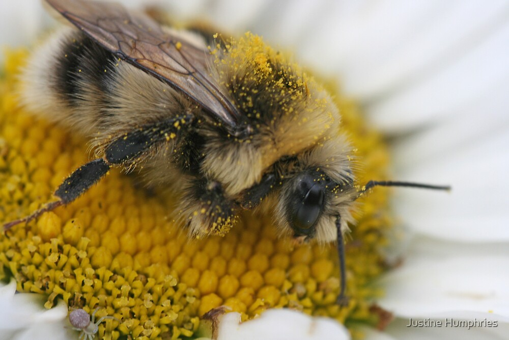 Searching for Pollen by Justine Humphries