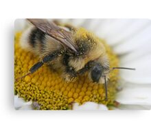 Searching for Pollen Metal Print