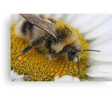 Searching for Pollen Canvas Print