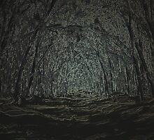 Into the Forest by Hippo