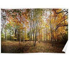 Autumnal Wood Poster