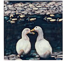 Two white ducks with young by nitrams