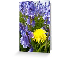 The lonely Dandelion Greeting Card