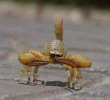 - Scorpion - by Mark Lindsay