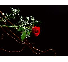 rose on black Photographic Print