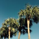 3 Palm Trees by ametrines