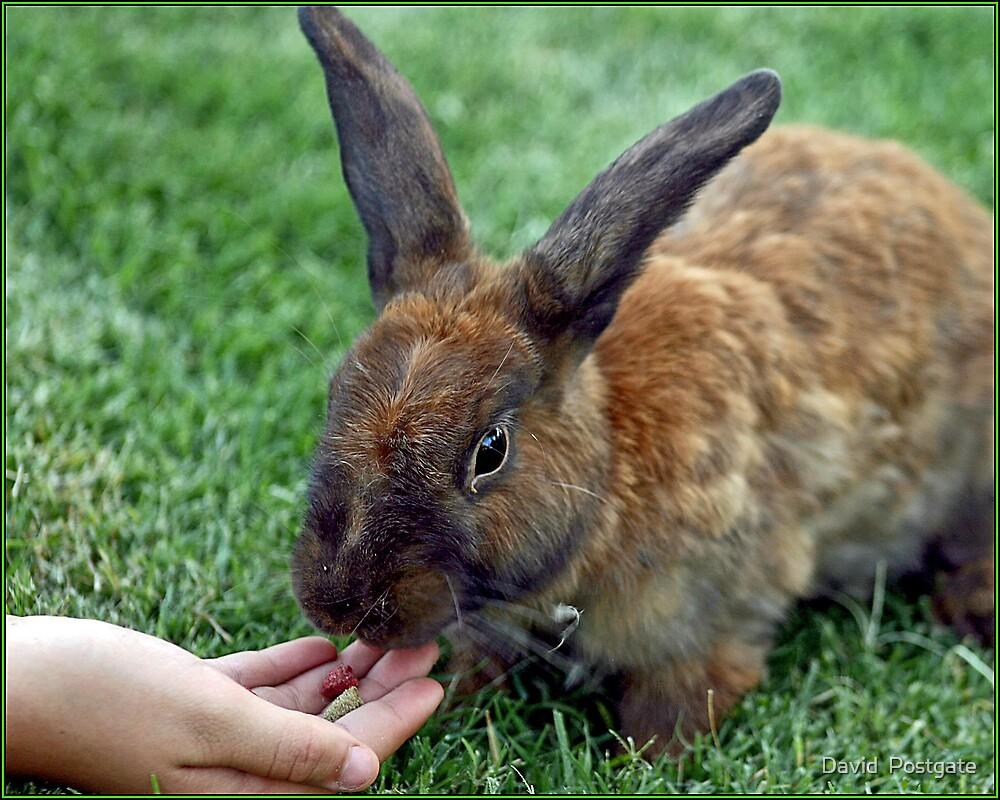 The Brown Rabbit by David  Postgate