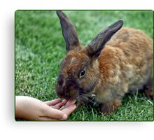 The Brown Rabbit Canvas Print