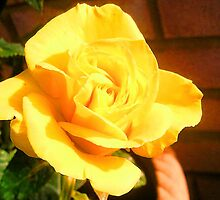 Yellow Rose by sammiejayjay