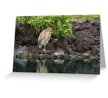 Sheltered Greeting Card