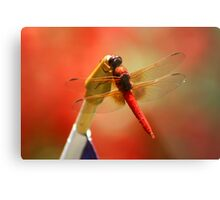Red Patriot Metal Print