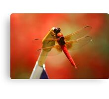 Red Patriot Canvas Print