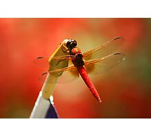 Red Patriot Photographic Print