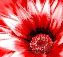 Red flower close up. by greenrockart