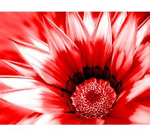 Red flower close up. Photographic Print