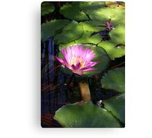 Water Lily's Glow Canvas Print