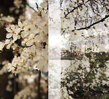 The Cherry Orchard by TheMeliorist