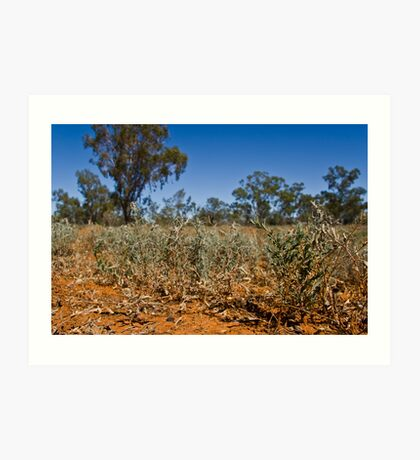 Shrubs of the Outback Art Print