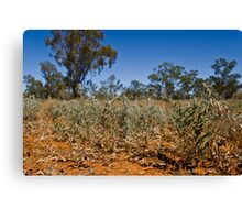 Shrubs of the Outback Canvas Print