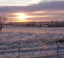 ice storm 2007 4 by pictureman65622