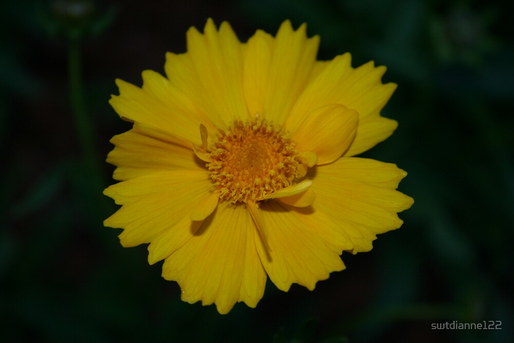 yellow flower by swtdianne122