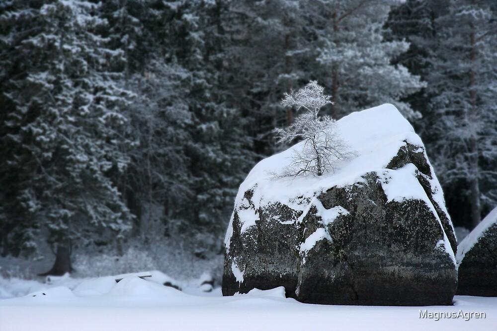 Rocks and shrubs by MagnusAgren