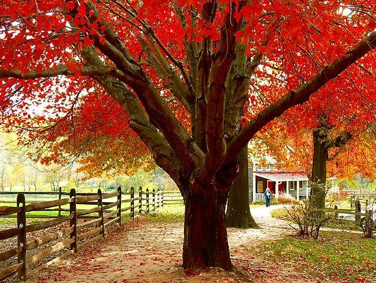 #68  Homestead In Autumn by MyInnereyeMike