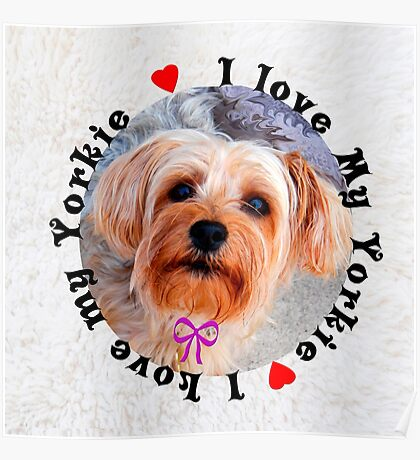 I love my Yorkie Female Yorkshire Terrier Dog                                 Poster