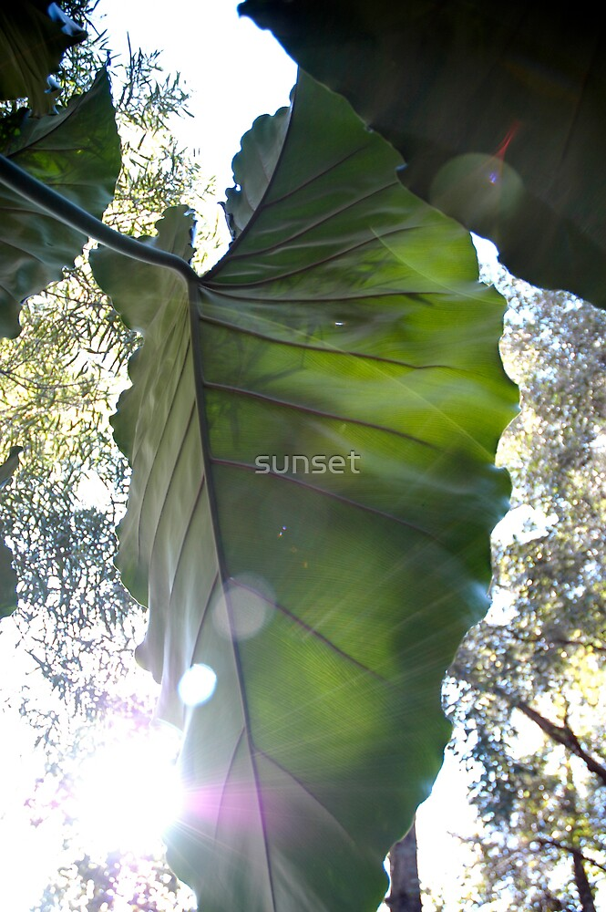 elephant leaf by sunset