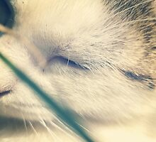 Sleeping cat by Bela Dako