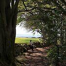 Forest walks  by Merice Ewart Marshall - LFA